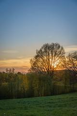 Bucolic sunset (ninfaj) Tags: sunset colors zeiss landscape schweiz switzerland sonnenuntergang sony landschaft sonne ef50mmf18 sonyalpha7ii zeisssonnartfe55mmf18