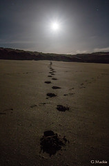 Making Tracks (Gordon Mackie) Tags: beach footprints moonlight sutherland strathy nightskyphoto