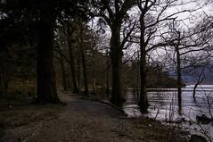 Loch Lomond (jamie reilly) Tags: tree water scotland flood highland loch highwater lochlomond balmaha rowardennan