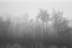 B&W (HuntRei) Tags: new york autumn white black fall film nature fog zeiss 35mm outdoors nj contax carl jersey g2 cinestill bwxx