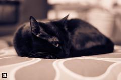 DSCF2215.jpg (3Eles) Tags: gatos bonnie