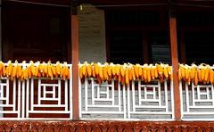 Corn (Py All) Tags: nepal house trek outside corn asia dry asie maison pokhara extrieur annapurna faade drying mas scher nayapul