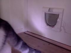 20160210-112247-i-1 (Catflap central) Tags: camera dog pet cats woof cat pi raspberry meow doggie catdoor catflap kattenluik katzenklappe catflapj2nnl taggingasdoguntilautotagginghasanoptout robotaggingisthedevil