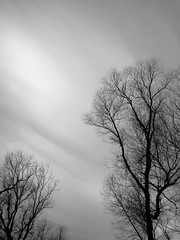 IMG_7076 (Mat_B) Tags: park winter sky white lake abstract black cold tree nature silhouette clouds photography branch natural state wind walk january hills area swept moraine thaw defiance 2016
