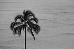 _HDA3921_181983.jpg (There is always more mystery) Tags: beach hawaii hotel waikiki oahu royalhawaiian