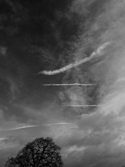 cuneiform (watcher330) Tags: sky cloud tree contrail symbols newcastleemlyn