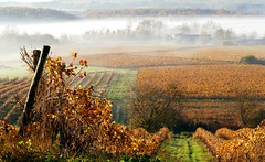 Automne en Cognac - Autumn in Cognac - [Explore] (Jean-Luc Peluchon) Tags: autumn mist france fog automne vine explore cognac brouillard vigne charente 1000faves