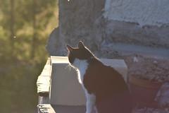 Chacture (La Magie Du Moment) Tags: nature chat extrieur flin fauve
