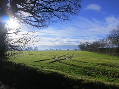 Beautiful morning (catherine.moore44) Tags: uk morning winter england sky tree nature field sunshine clouds rural landscape countryside britain outdoor norfolk peaceful farmland fields serene nofilter