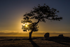 Sunset peace (RissaJT_23) Tags: light sunset sky sun tree nature clouds canon rocks peace manfrotto paddock canon1740mm dogrocks canon6d cityofgreatergeelong canoneos6d westbatesford