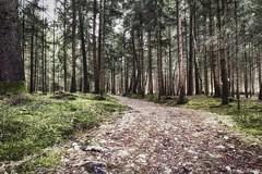 der weg | the way (lichtmaler.at) Tags: trees tree green forest way meadow wiese grn wald bume baum weg