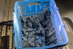 Turtle hatchlings (m_c2012) Tags: malaysia borneo sabah turtleisland selinganisland