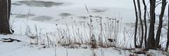 IMG_7679iPH5s Arlington Reservoir © 2016 Paul Light (Paul Light) Tags: winter panorama ice arlington landscape massachusetts newengland