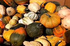 Knobby gourds 4288x2848 (Charlotte Clarke Geier) Tags: wallpapers screensavers
