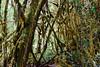 Barva Volcano (cataava) Tags: green nature forest volcano nationalpark nikon costarica barva