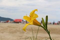 I could care less (Rodrigo Alceu Dispor) Tags: flower macro beach care