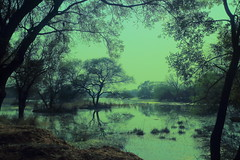 IMG_2522a (Tarun Chopra) Tags: travel india canon landscape photography indiatravelphotography gurugram