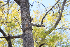 DSC_0990 (julian jones (arkansas)) Tags: travel trees plants sunlight green history nature leaves lines curves perspective shapes ground places trail arkansas height aboretum photowalking