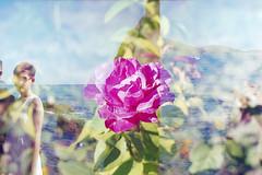 film (La fille renne) Tags: pink wedding sea plant film rose analog 35mm landscape lomography doubleexposure lomolca multipleexposure fujifilm expired mx expiredfilm 50mmf17 minoltasrt303b fujic100 lafillerenne alexcetera