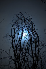 Embrace the Moon (Brian 104) Tags: trees winter moon silhouette branches clutching