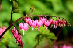 JLM_1979 (My world, as I see it.) Tags: morning flowers people macro nikon dew wee 105 f28 d7100
