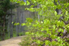 Trkensturz (anuwintschalek) Tags: wood mountain green berg forest austria spring path april grn wald mets niedersterreich beech rada frhling pfad buche beechtrees kevad 2016 roheline mgi trkensturz d7k pk pgimets hiirekrvul nikond7000 pgid hiirekrvad 18140vr