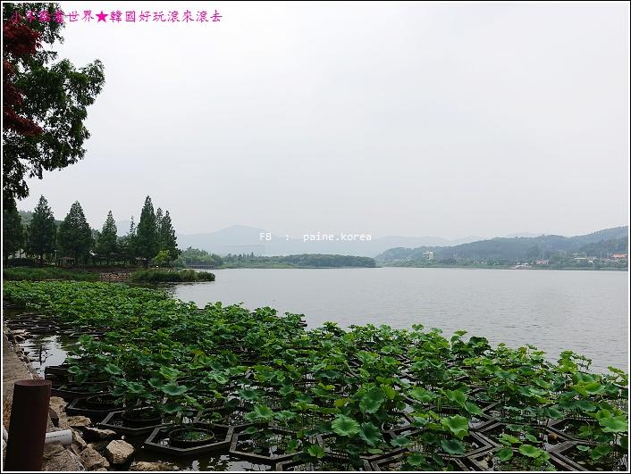 牙山神井湖水公園 (14).JPG