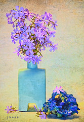 Native Phlox in a Michael Graves Vase with mineral specimen (Hood Ornaments) Tags: flowers stilllife texture rock mineral vase phlox specimen michaelgraves