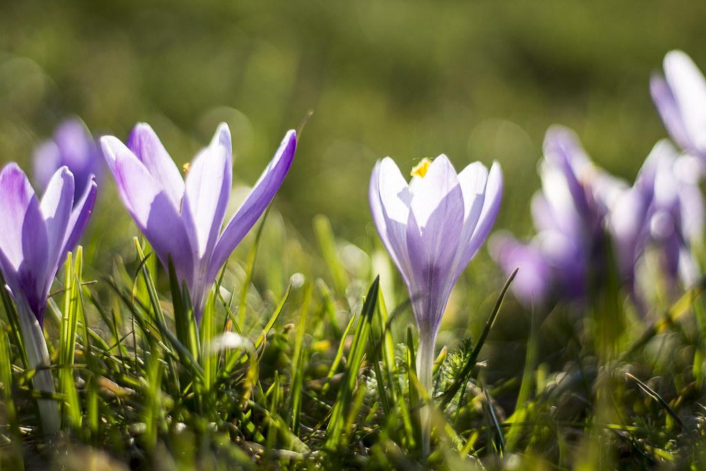 Frühling (Megapixel Dresden) Tags: Macro Modern Natur Blumen Lila Gelb  Elegant Blau Fein