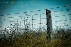 On The Other Side (HFF) (13skies) Tags: sky green up grass fence private climb post border barbedwire boundary overthere meaning fencepost wirefence hff jumpthefence happyfencefriday