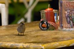 TH20150513A603201 (fotografie-heinrich) Tags: ostsee vogel spatz zingst erdbeerhof