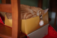DSC09056 (lazybonessss) Tags: leica cat momo kitten2 summicronm50 sonya7 sonyilce7