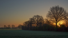 Fields north of Bargteheide (Ralf Muennich) Tags: trees landscape felder fields landschaft bume