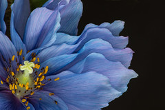 Flower  [Explored 4/10/16 #14] (Valentina Sokolskaya) Tags: challengegamewinner