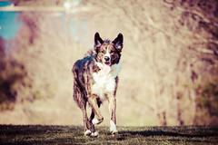 half-blood prince (sparkleplenty_fotos) Tags: dog jackson pup jax sliders hugedog halfbloodprince hss slid largedog happysliderssunday