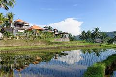 Rgion de Munkuk (Claude-Olivier Marti) Tags: bali indonesia asia asie indonsie munduk
