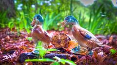 Ceramic Ducks (Bob G. Bell) Tags: nature grass ceramics models fujifilm mallard earthenware xt1 bobbell ducksmallards