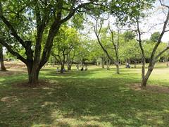 Jardines en Tingambato (Garenez) Tags: michoacn jardn tingambato aguacatales