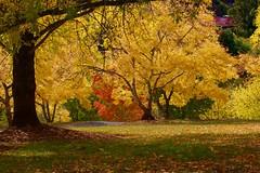 Peace and quiet (dmunro100) Tags: autumn fall canon season eos hills adelaide southaustralia botanics mountlofty 60d canonef70300mmf456lisusm