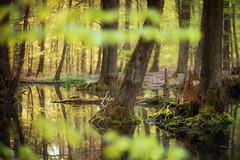 waterworld (Rainer Schund) Tags: nature forest abend three nikon wasser natur forgotten moor wald baum moos waterworld feucht nikond700 naturemasterclass natureexploring moosbett