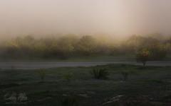 The Fog... (calba) Tags: trees mist fog landscape nikon moody texas shadows ethereal hillcountry texaswildflowers texashillcountry wildfowers marblefallstexas texasbluebonnets texaslandscape findingthelight nikon2470mmf28g cathyalbaphotography cathyalba nikond750 wildflowers2016