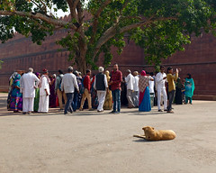 Canine and Crowd (Mondmann) Tags: travel people india tree history asia fort assemblage delhi crowd group landmark historic indians fortification fortress newdelhi redfort southasia mughal lalqila mondmann fujifilmx100s