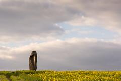 Ein Nachmittag im Frhling (thunderbird-72) Tags: abend frankreich felder wolken skulptur fr raps frhling spaziergang abendrot abendstimmung abendlicht launstroff steineandergrenze alsacechampagneardennelorraine alsacechampagneardennelorrain