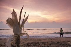 Marina, Chennai (Kals Pics) Tags: life morning sky india man beach marina corn waves cloudy pov perspective hues chennai seashore tamilnadu roi bayofbengal cwc singarachennai rootsofindia kalspics chennaiweelendclickers fabulouschennai