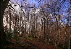 a forest (amazingstoker) Tags: bridge light tree forest canal leaf floor sandy low hill hampshire hatch basingstoke sprats dogmersfield tundry