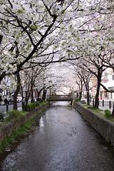 京都日本語中心 (12)