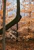 Winter Leaves (Dalliance with Light (Andy Farmer)) Tags: winter fog forest us newjersey woods unitedstates newbrunswick helyarwoods rutgersgardens