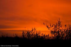 Posbank 31-01-'16 (Diverse-Media.nl) Tags: morning sky orange sunrise gold golden early postbank diverse hour lucht gouden veluwe posbank ochtend oranje zonsopgang goud uur vroeg diversemedia diversemedianl rt310116