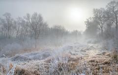 Freezing light (piotrekfil) Tags: morning trees winter sky sun sunlight snow nature fog sunrise landscape pentax hoarfrost poland piotrfil