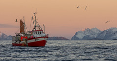 Pulling in a net full of cod (Snemann) Tags: winter norway colours january fishingboats atwork atsea shipsandboats smcpda200mmf28edifsdm pentaxk5